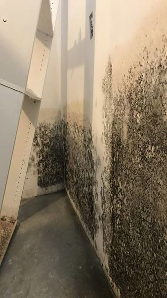 New Milford, CT Burst Pipe causing Mold (1)